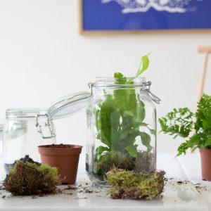 Plantjar-9-min